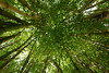 Bamboo bower (Messent) Tags: pictures england poetry bamboo tanka poetryandpicturesinternational poetryforall