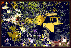 Tonka in the Monkeyface Jungle (dsm8954) Tags: flowers yellow pansies photoshopcs2 gardenart d60 tonkadumptruck awardtree