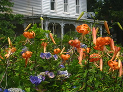 flowers at another house
