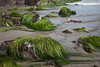 Surf Grass at Low Tide at Point of Arches (Lee Rentz) Tags: ocean sea wild usa plant beach nature leaves america coast washington flora olympicpeninsula pacificocean coastal shore experience northamerica flowing lowtide wilderness washingtonstate olympicnationalpark graceful seashore tidal linear shishibeach pointofarches surfgrass phyllospadix basketgrass