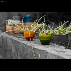 Colors 276/365 (Alucardo) Tags: bw plant david macro green nature colors wall canon garden photography photographie thomas 100mm pot vegetation 365 partial project365 thomasdavid 5d2 5dii defi365 thomasdavidphotography thomasdavidphotographie