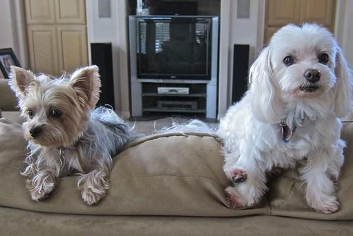 Max&Pip-July2011—03