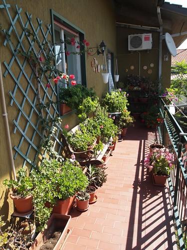Daniela's Balcony Garden