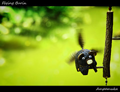 Flying Burin /   (AmpamukA) Tags: wood city travel cute shop pig fly flying ancient hand bokeh moo bin made gift thai burin samutprakarn