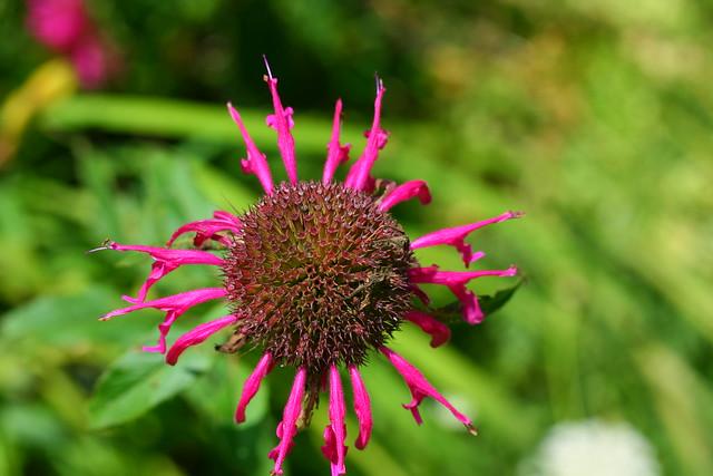 Dilapidated flower