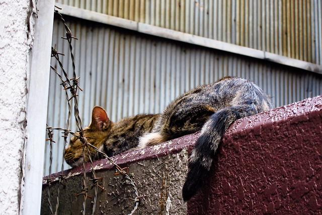 Today's Cat@2011-08-01