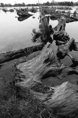 Dead Wood by 我是歐嚕嚕 (I'm Olulu...)