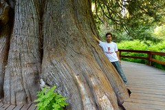 Me by the Giant Western Red Cedar