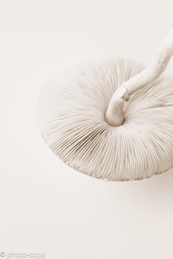 wild mushroom sepia