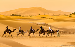 Travelling with Camels XI - The End of the Journey (Beum Gallery) Tags: voyage africa travelling sahara sand desert dunes dune sable riding camel morocco journey maroc maghreb camels afrique dsert merzouga nomade dromadaire chameau ergchebbi chameaux dromadaires  saharaoui