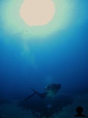 bottom cruisin (Aaron Lynton) Tags: hawaii scuba diving maui caves shipwreck turtles scooters greenseaturtles dpv