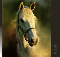 Horses Series_________#.1: head portrait(Female) (G.LAI) Tags: light horses horse white art nature animals painting fantastic head portait class master horsehead whitehorse portiat supershot idream headportrait phoptography horseimage dragondaggeraward magicunicornverybest magicunicornmasterpiece elitegalleryaoi onlythebestofnature asquaresuperstarstemple flickrstruereflection1