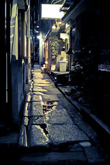 Back Alley (Guwashi999) Tags: street japan night tokyo alley backalley sigma    foveon kagurazaka   dp2 sigmadp2