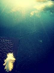 Plume (CroytaqueCie) Tags: sea sky mer reflection lomo lomography fake reflet ciel plume littlephoto