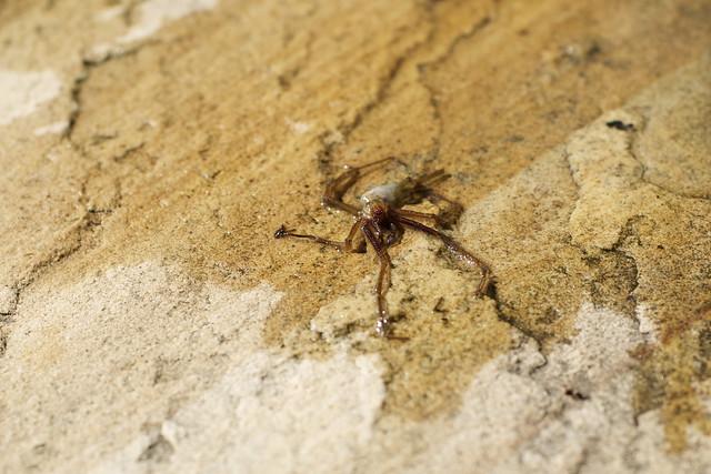 dead wet spider
