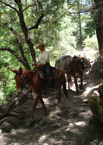 Pack of mules coming down the John Muir Trail