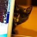 Paddy en de laptop