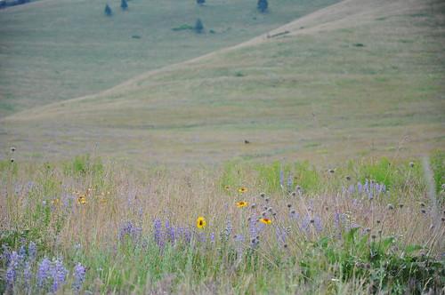 montana july 2011_1839