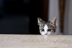 Boris!! (ozio-bao) Tags: cat canon 50mm 18 gatto 40d challengeyouwinner