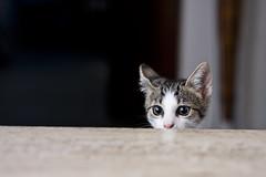 Boris!! (ozio-bao) Tags: cat canon 50mm 18 gatto 40d challengeyouwinner