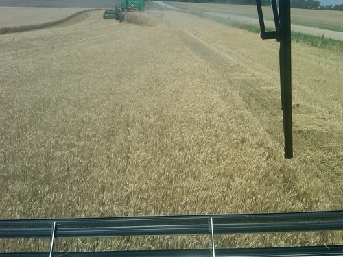 wheat harvest 11e