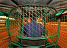 Kinetic Claustrophobia (bijoyKetan) Tags: motion colors lights bars slow fisheye shutter dhaka bangladesh cng ketan responsibilities bijoyketan rokinon8mm35manualfisheye