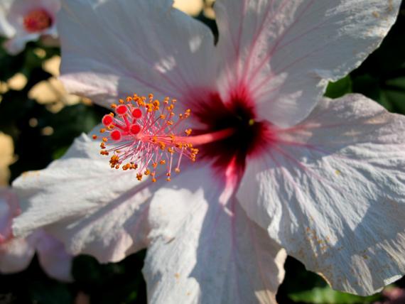 111012_Botanicactus_02