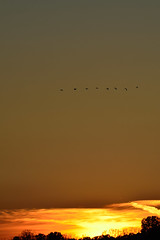 Geese DSC_4544 by Mully410 * Images