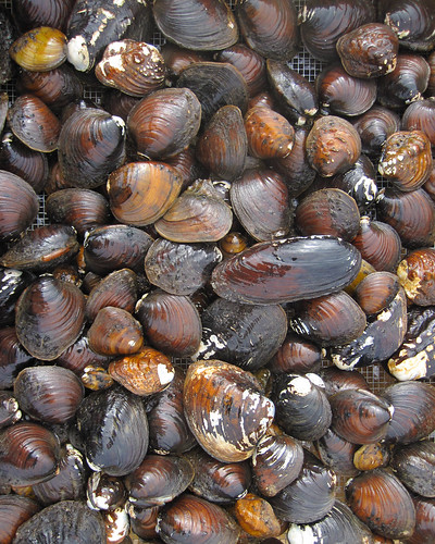 Boatload of Mussel