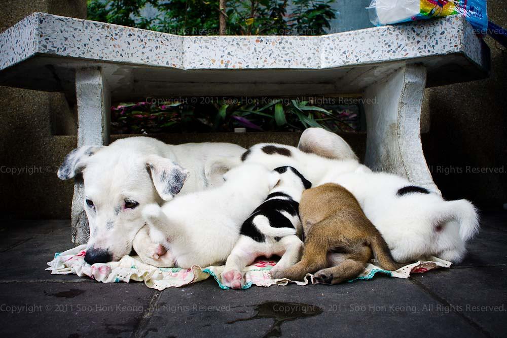 Mother Feeding @ Bangkok, Thailand