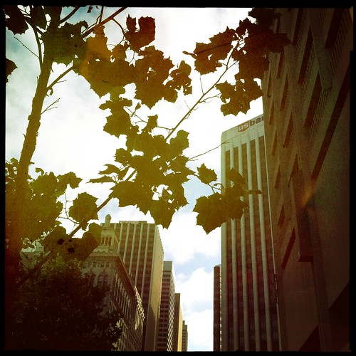 SF cityscape & leaves