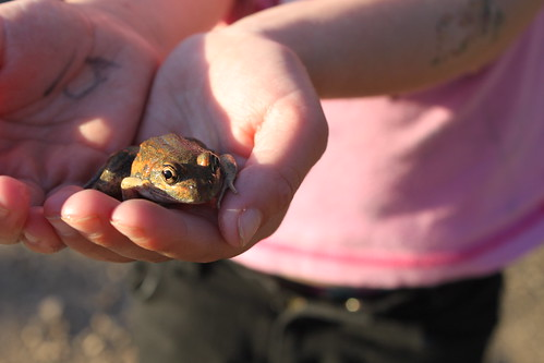 Amelia's hands holding frog