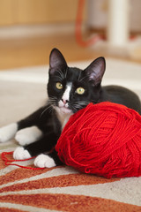 """  - !.."" * Wool ball is mine! (v.plessky) Tags: red portrait black slr wool cat kitten chat raw noir minolta russia top negro photographers sigma preto gato dynax7d jpeg gatto kater  gatinho gatito chaton  gattino konicaminolta   schwarze minino  bichano  sigmalens sigma2470mmf28exdg   micino jungekatze woolball konicaminoltadynax7d rawjpeg abigfave  2470mmf28exdg vadimplessky mcio nro plessky   brigettes mygearandme"