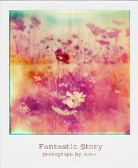 fantastic story (sakuto-style) Tags: flower polaroid コスモス