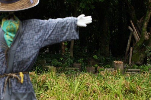 田の案山子 / Scarecrow in a rice paddy in Japan