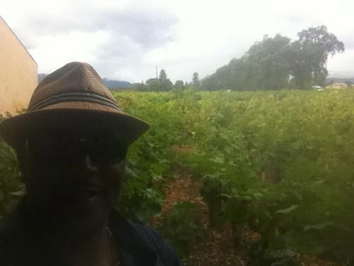 Whitehall Vineyards