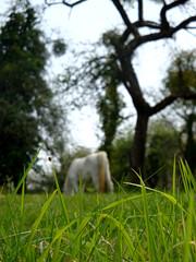 Le printemps: Cheval (vschneid) Tags: voyage blue sky horse plants france tree nature grass garden cheval spring village view natural bleu alsace arbre printemps fort herbe chevaux naturel hartmannswiller
