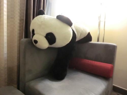 Lying panda @ Novotel hotel in BeiJing