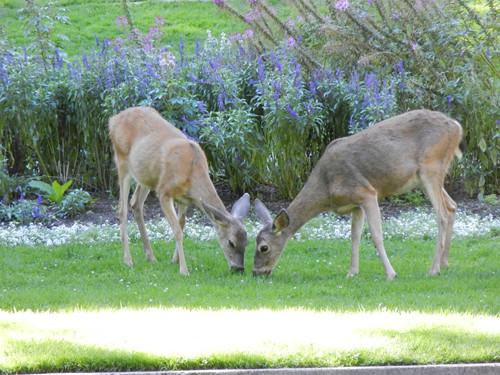 Lithia Park, Ashland, Oregon _ 6185