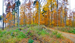 Autumn forest (The Adventurous Eye) Tags: autumn panorama colors forest landscape woods nikon colours d brno morava 7000 jin d7000