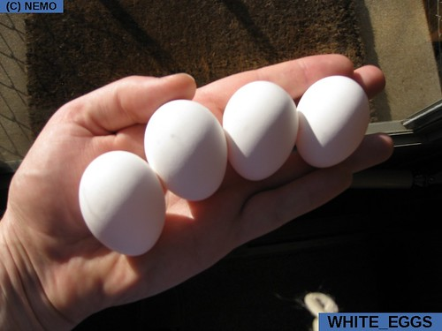 white_eggs