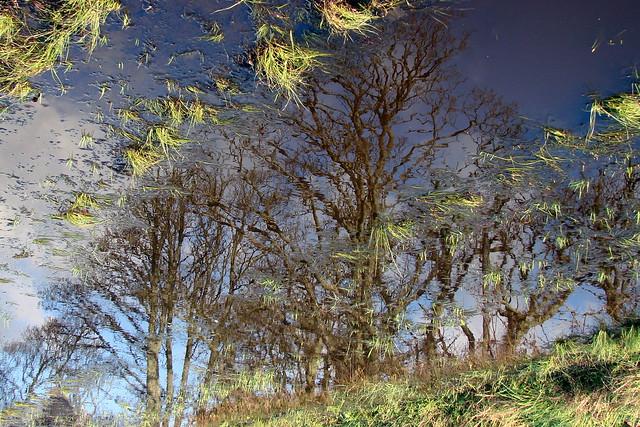 Puddle Avenue of Trees