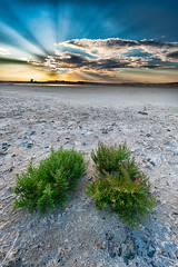 Life at the dried salt lake (Xavier Farre) Tags: paisaje keep