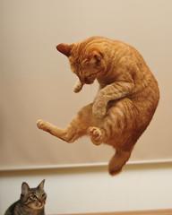 example (rampx) Tags: cat jump action explore master  apprentice  kinako explored kittyschoice