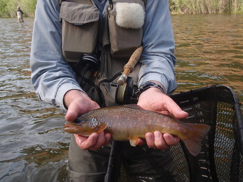 Frying Pan River Fly Fishing