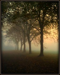 11-11-11 Nature style (JHHALL2010.) Tags: uk trees mist nature fog remembranceday 111111 platinumheartawards naturessilhouettes oracope theinspirationgroup masterclasselite