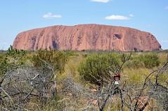 Mala at Uluru NT