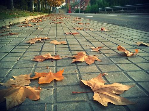 ...noviembre... by Garbándaras