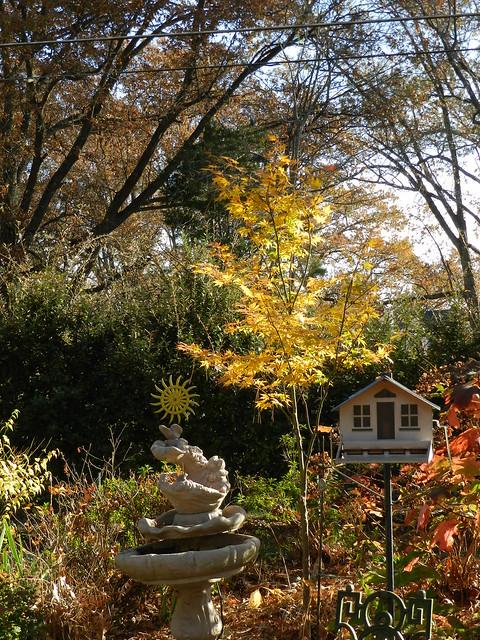 November Garden 127