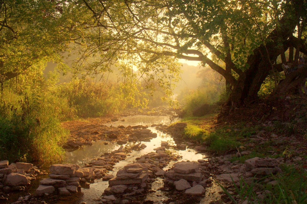 Morning light by the stream